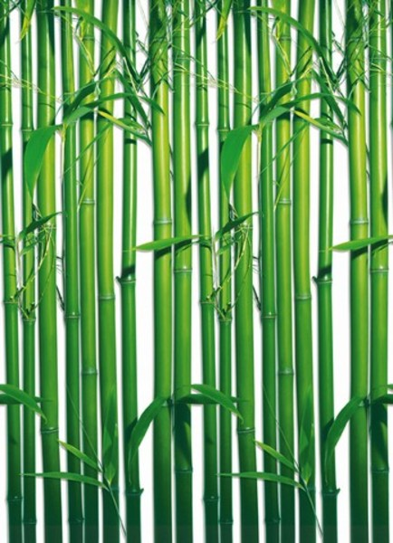 Image of   Wizard Genius F421 Bamboo
