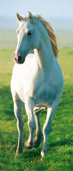 Image of   Wizard Genius F514 White Horse