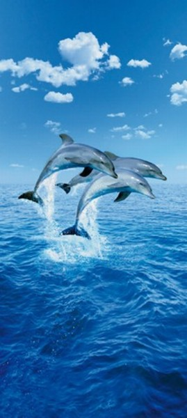 Image of   Wizard Genius F599 Three Dolphins